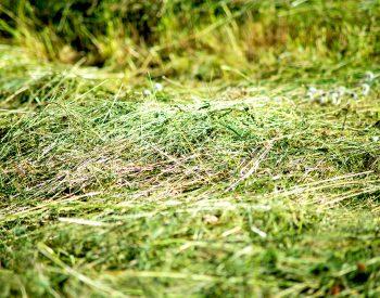 Slaget gräs