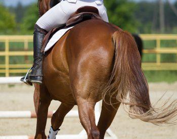 Häst och ryttare framför ett hinder