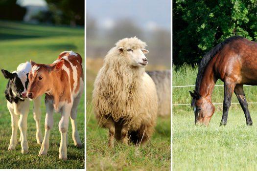 Kombipaket för nöt, häst och får